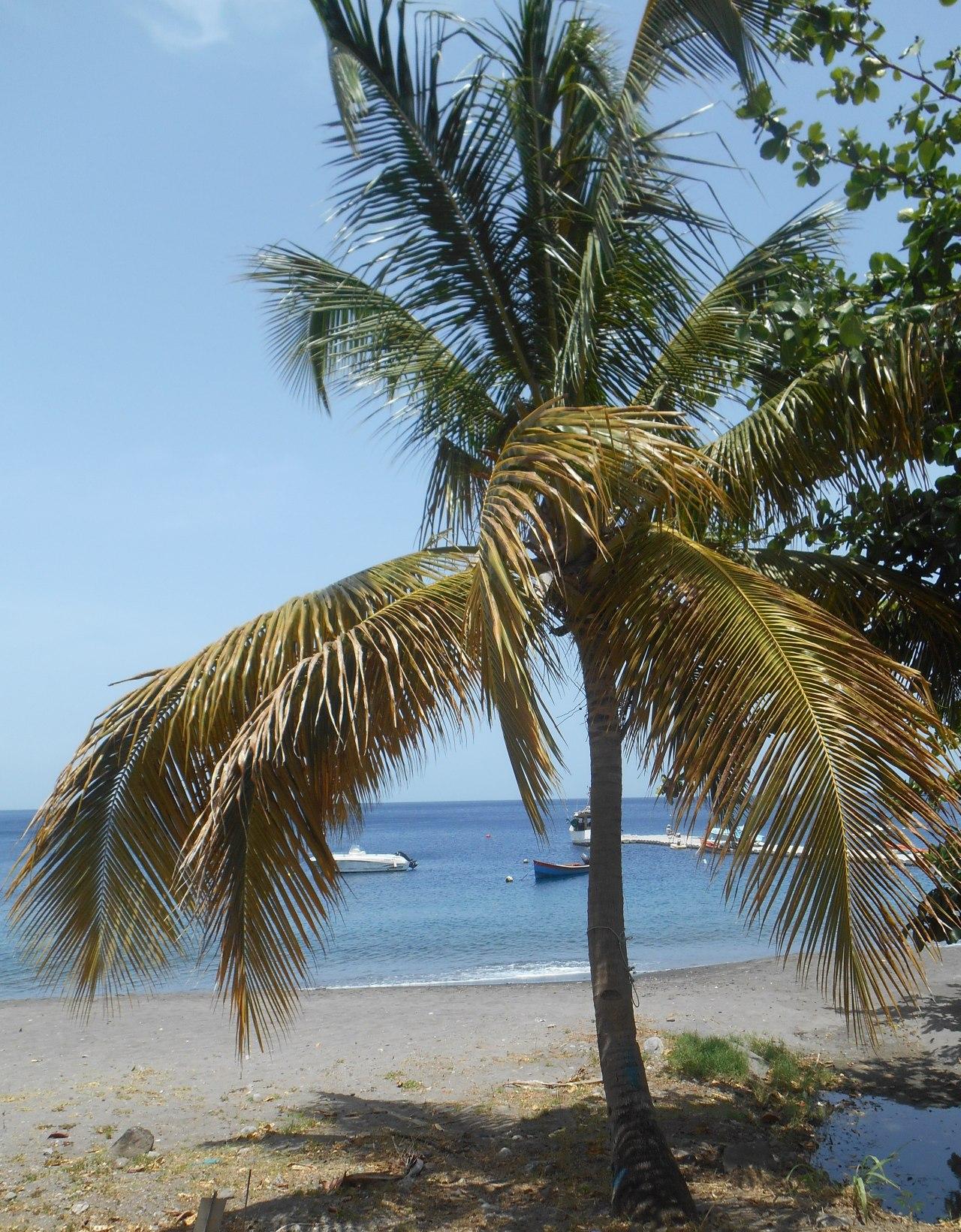 palmier-saint-pierre.jpg