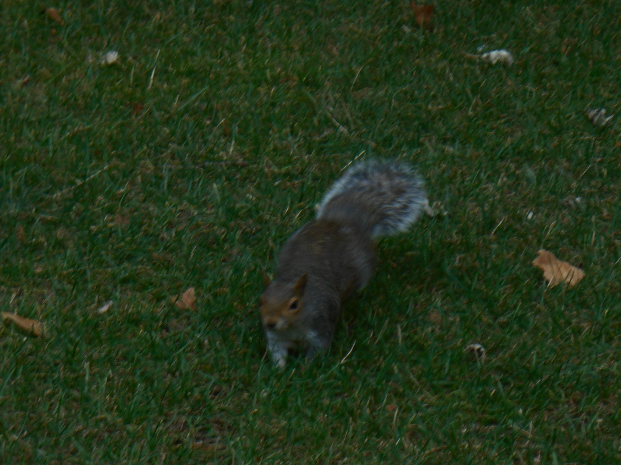 saint-james-park-squirrels.jpg