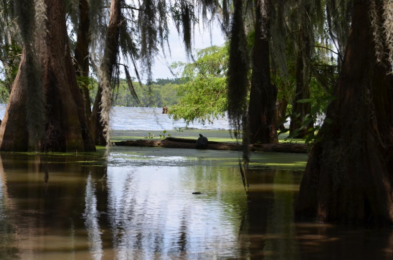 lake-martin-louisiane.jpg